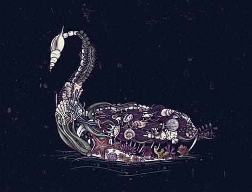 aeseaes-black-swan.jpg