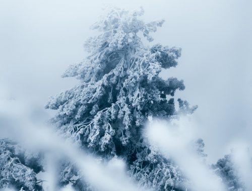 kirill-pershin-snowy-tree-unsplash.jpg