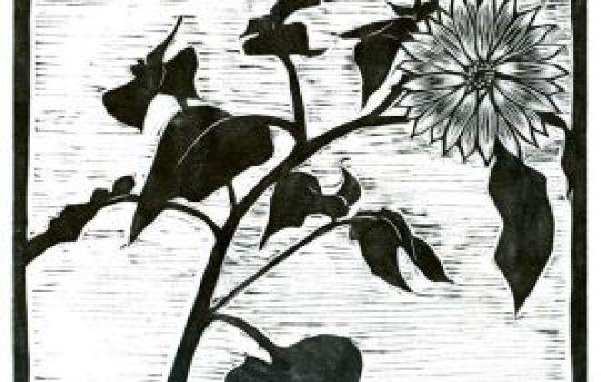 sun-flower1.jpgw300.jpeg